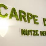 Natur Wanddekoration mit Moosschriften konserviert - Carpe Diem (Nutze den Tag)