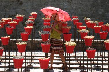 Taschenschirm in Rot mit Rosenmotiv