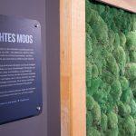 Dreidimensionale Mooswand aus konserviertem Moos